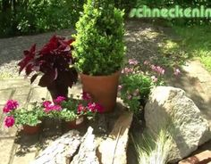 Kübel dekorieren unterschiedlichen Materialien wie Blumen, Buchs, Gräser, Stein und Baumrinde