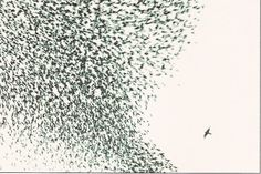 Sky chase - Manuel Presti - Wildlife Photographer of the Year 2005 - Grand title winner Swarm Intelligence, Animal Intelligence, Flight Patterns, Flock Of Birds, Starling, Gravure, Top Photo, Flocking, Wildlife Photography