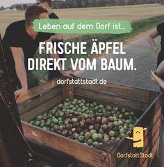 - http://ift.tt/2cIXOst - #dorfkindmoment #dorfstattstadt