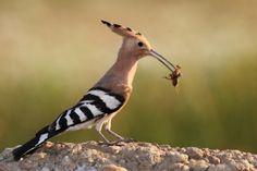 KÉPESLAPKÜLDÉS - kovacsneagi.qwqw.hu Bird, Animals, Animales, Animaux, Birds, Animal Memes, Animal, Animais, Dieren