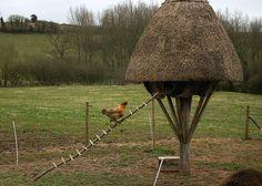 Chicken Climbs Ladder by mrwalker, via Flickr