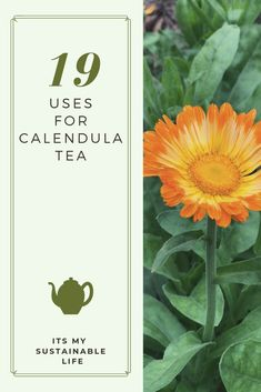 Calendula tea may be one of the easiest ways to utilize this powerfully medicinal plant known for it's antioxidant, antiviral, astringent and anti-spasmodic Cold Home Remedies, Natural Health Remedies, Herbal Remedies, Calendula Tea, Calendula Benefits, Baby Shower Gift Basket, Flower Tea, Medicinal Plants, Herbal Plants