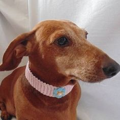 Crocheted decorative collar for a dog or cat, fits on a neck circumference of cm. The collar is removable with a button and decorated with decorative elements.Please note that this collar is an accessory and is not intended for a. Dachshund Clothes, Small Dogs, Cats, Shopping, Gift, Gatos, Kitty Cats, Little Dogs, Cat