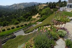 Gardens by Lazar Landscape  --> that is one steep front yard!