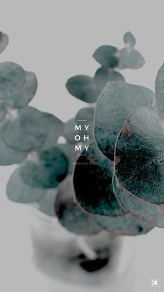 My Oh My Lyrics by The Sweeplings - Karslı