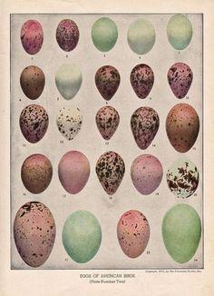 Antique bird egg illustration