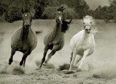 Young brood mares by Wojtek Kwiatkowski photography