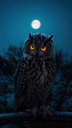 Owl Wallpaper Iphone, Eyes Wallpaper, Animal Wallpaper, Dark Wallpaper, Iphone Wallpapers, Cute Owls Wallpaper, Beautiful Owl, Animals Beautiful, Cute Animals