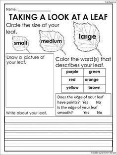 FREE: Fall Leaf Observation Sheet: Science Center Activity www. First Grade Science, Kindergarten Science, Kindergarten Classroom, Teaching Science, Science For Kids, Teaching Ideas, Elementary Science, Summer Science, Science Fun