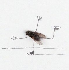 Doodles with dead flies. Gross yet funny. But we don't have any dead flies, the cats eat them. Bored At Work, Insect Art, Lomography, Funny Happy, Funny Art, Happy Friday, Funny Photos, Make Me Smile, Illustration