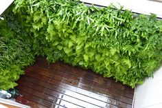 Plants On Walls vertical garden systems: Custom Designed Fern Filled Window Well