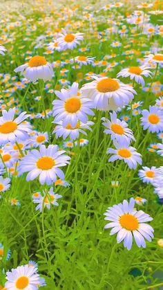 Wallpaper Nature Flowers, Beautiful Landscape Wallpaper, Beautiful Flowers Wallpapers, Beautiful Photos Of Nature, Amazing Nature, Beautiful Landscapes, Most Beautiful Flowers, Nature Aesthetic, Flower Aesthetic