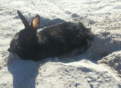 Milo enjoying time at the beach