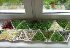 Kiełkowniki - domowy ogród - zdjęcie