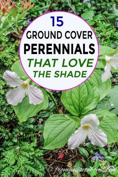 These shade loving perennial ground cover plants are AWESOME! So many pretty flowers that will look great in my backyard shade garden. # Informations About 21 Stunning Perennial Ground Cover Plants That Thrive in the Shad Woodland Plants, Woodland Garden, Forest Garden, Ground Cover Shade, Low Growing Ground Cover, Part Shade Perennials, Flowers Perennials, Groundcover For Shade, Fall Perennials
