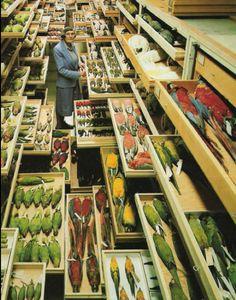 Vogelsupermarkt