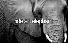 One thing I want to do before I die is ride an elephant! And I can only hope this happens.
