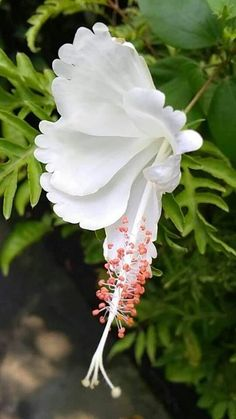 How to Plant Potted Flowers Outdoors in the Soil : Garden Space – Top Soop Strange Flowers, Unusual Flowers, Unusual Plants, Most Beautiful Flowers, Rare Flowers, Exotic Plants, Flowers Nature, Pretty Flowers, White Flowers