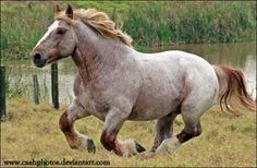 Renard de Beaufort by CC-PhotoArt on DeviantArt All The Pretty Horses, Beautiful Horses, Hello Beautiful, Different Horse Breeds, Cowboy Horse, Clydesdale, Draft Horses, Gentle Giant, Beautiful Creatures