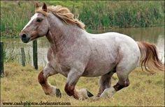 bdo how to make horses faster