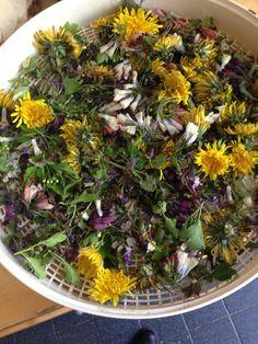 Klaar om te drogen voor de voorjaars kruidenthee
