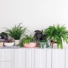 Sind Sie dabei, die Dekoration in Ihrem Haus zu erneuern? Sie sollten unbedingt auch pflegeleichte Zimmerpflanzen in Erwägung ziehen...