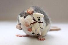 Ratitas con osos de peluche