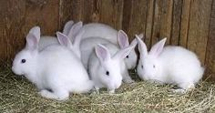 How To Start A Successful Rabbit Farm