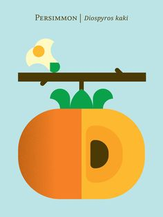 Persimmon   12 Fruit And Vegetable Posters For Foodies