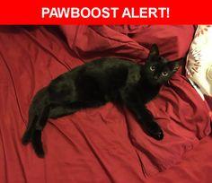 Please spread the word! Kenosha was last seen in Melrose Park, IL 60160.  Description: Male black short hair cat 6 months old  Nearest Address: Melrose Park, IL, United States