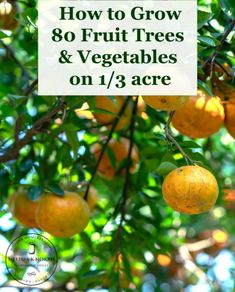 Urban Farming 80 Fruit Trees on 1 3 Acre with Vegetables learn these easy tips to grow enough food for your family and your community Growing Goji Berries, Growing Fruit Trees, Growing Plants, Small Fruit Trees, Vegetable Farming, Vegetable Garden, Espalier Fruit Trees, Planting Fruit Trees, Fruit Plants