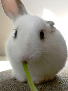 Mochi <3 #bunny