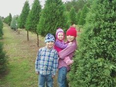 How to Select Live Christmas Trees
