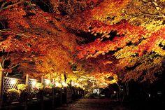 伊豆で出会う!秋色絶景6選。艶やかに色づく紅葉や夕陽を見よう!