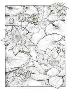 Habitats - Black & White by order - Coloring Pages ❤️❤️ - . - Habitats – Black & White by order – Coloring Pages ❤️❤️ – - Flower Coloring Pages, Coloring Book Pages, Colouring Pages For Adults, Coloring Pages Nature, Pattern Coloring Pages, Drawing Sketches, Art Drawings, Tattoo Drawings, Pattern Drawing
