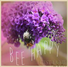 Bee happy  (flower - purple)
