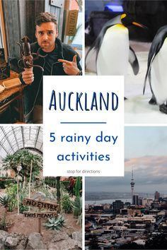 New Zealand Cities, New Zealand Travel Guide, Rainy Day Activities, 3 In One, Auckland, Amazing Destinations, Rainy Days, Summer Time, Places To See