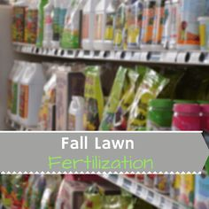 Extension - Providing trusted, practical education to help you solve problems, develop skills and build a better future. Lawn Fertilizer, Problem Solving, Garden Plants, Garden Landscaping, Colorado, Gardening, Patio, Education, Fall