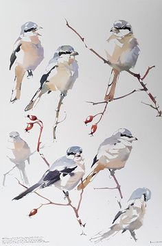 Great Grey Shrike in soft morning light. Watercolor birds painting by artist Darren Woodhead. Simple strokes that are incredibly effective. Watercolor Artists, Watercolor Bird, Watercolor Drawing, Watercolor Animals, Watercolor Landscape, Painting & Drawing, Watercolor Paintings, Watercolor Portraits, Watercolours