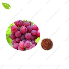 Grape Seed Extract CAS NO. 84929-27-1 | Grape Seed Extract Manufacturer | Grape Seed Extract Supplier
