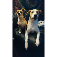 My little pups http://ift.tt/2gSTx6L