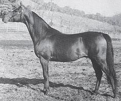CEDR (Equifor x *Cosmosa, by Witraz) 1958-1978 bay stallion imported to the USA 1971 by Clair Hill.