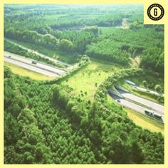12 Most Awesome Wildlife Crossings in the World | Environment on GOOD