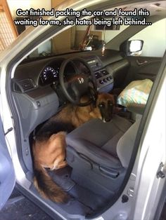 Please Bring Me! I Can Drive! - Funny pictures and memes of dogs doing and implying things. If you thought you couldn't possible love dogs anymore, this might prove you wrong. Cute Puppies, Cute Dogs, Dogs And Puppies, Doggies, Cute Funny Animals, Funny Dogs, Animal Pictures, Funny Pictures, Quote Pictures
