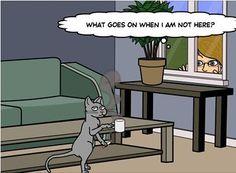 a cup of joe and a smoke...bad kitty