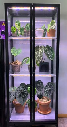 Finally started to put some plants in my ikea greenhouse cabinet! - houseplants Indoor Greenhouse, Indoor Garden, Indoor Plants, Ikea Plants, Room With Plants, Plant Shelves, Grow Lights, Garden Planters, Growing Plants