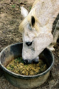 Caring for an older horse (and how to figure out a horse's age!)