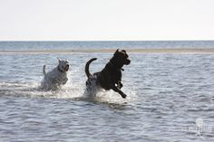 Dog-friendly ocean beaches on Cape Cod :: CapeCodPets :: Cape Cod's Online Community for Pets & Their Owners