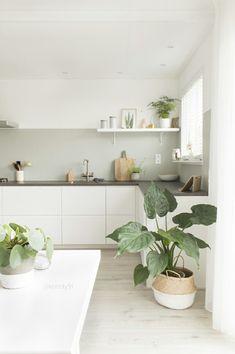 Minimalistische Küche mit Pflanzen