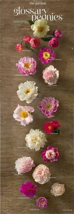 {do you know your peonies?} | The Sweet Escape. Swoon!